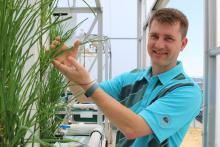 Dr. Dan Baker a VIU Fisheries and Aquaculture Professor, examines some of the produce growing in the aquaponics greenhouse.